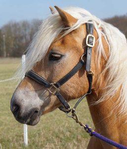 Pony ochtend
